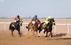 ميدان الفروسية بحائل يقيم حفل سباقه الـ 23